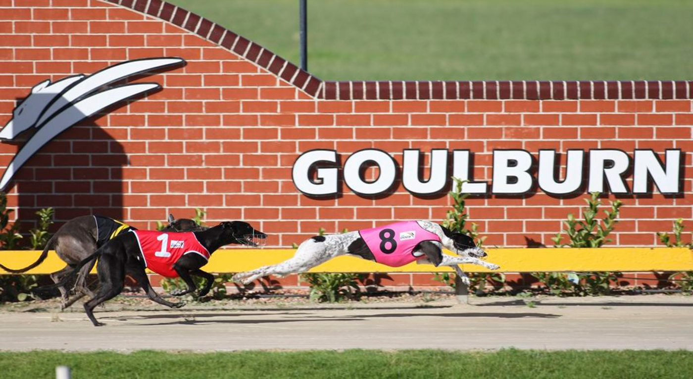 Goulburn Greyhound Finish line